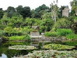 A scene in the Logan Botanic Garden on the Mull of Galloway